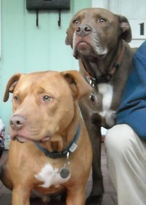 ernie and dexter