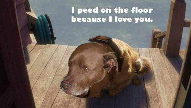 I peed on the floor because I love you.