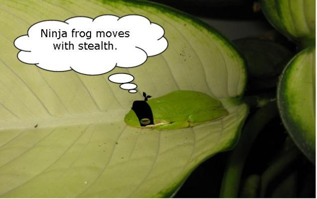 Ninja frog moves with stealth.