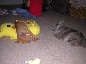 Baby Ernie (and a chubby Hemo)